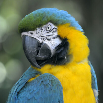 Tropical Zoo Ara